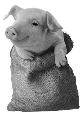 pig-bag