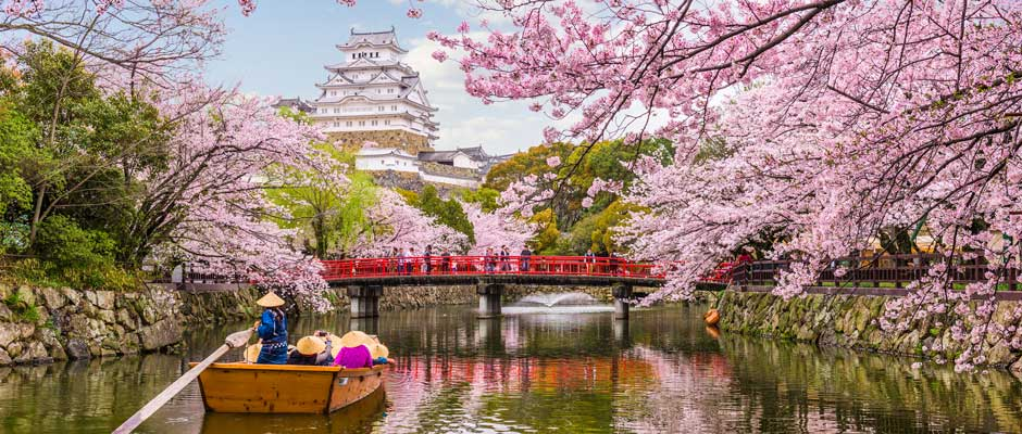 cherry blossoms in Himeji Castle japan